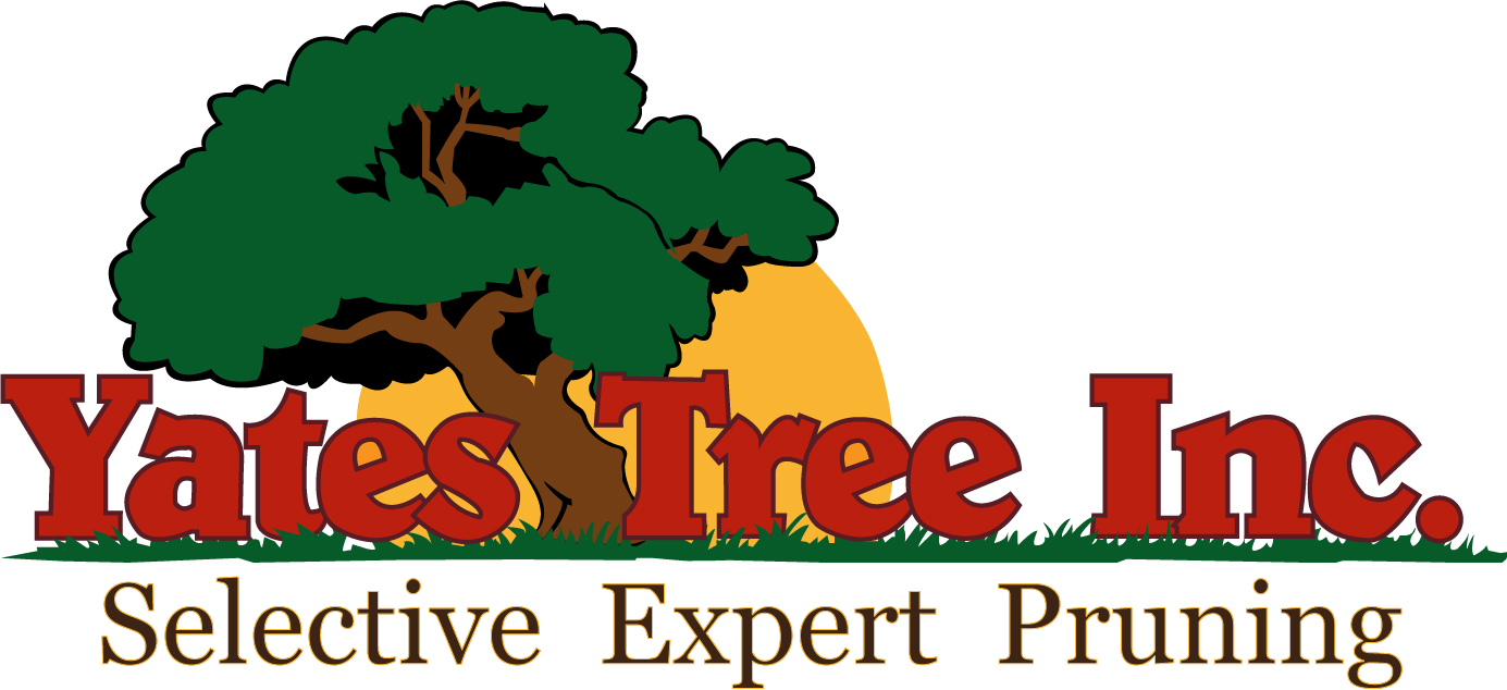 Expert Tree Services | Tree Trimming | San Antonio, TX
